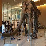 三重県総合博物館MieMu(みえむ)は家族連れに大人気