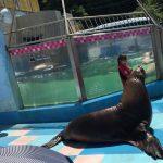 トドが外に出てきてくれる体験満載の水族館、伊勢シーパラダイス